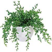 人工植物 ミニ グリーンネックレス 高さ150